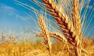 Beneficios del consumo de las semillas